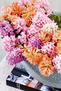 snijhyacint 003 WEBmg 200x300 - Lieflijke bloemen: de hyacint