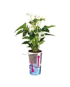 Aqua4Weeks 09mg 240x300 - Planten zonder zorgen