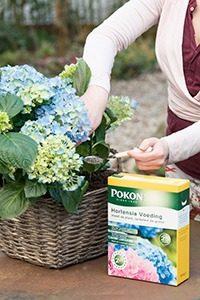 Pokon Hortensiavoeding 002 WEB 200x300 - Krachtvoer voor hortensia