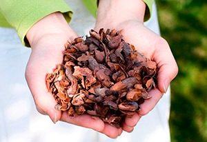 cacaodoppen 001a WEBmg 300x206 - Duurzame cacaodoppen
