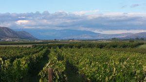 Wijngaard LR marcelineke 300x169 - Griekse wijnen in de hoofdrol bij Karakter