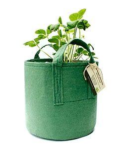 flexibele plantentas marcelineke 254x300 - Leerzame proefjes voor je moestuin
