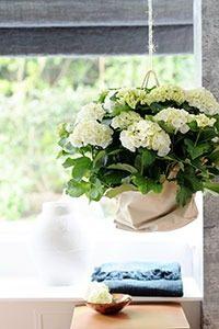 kamerhortensia 02 WEB marcelineke 200x300 - Een kamerhortensia fleurt je huis op!