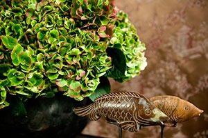 kamerhortensia 06 WEB marcelineke 300x200 - Een kamerhortensia fleurt je huis op!