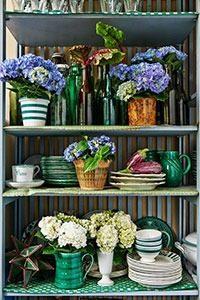kamerhortensia 11 WEB marcelineke 200x300 - Een kamerhortensia fleurt je huis op!