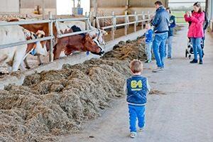 Campina Open Boerderijdagen 1 marcelineke 300x200 - Beleef het boerenleven