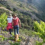 Cazebonne–wijngaard-marcelineke