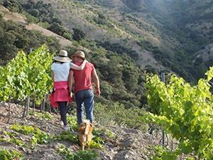 Cazebonne wijngaard marcelineke 300x225 - Cazebonne--wijngaard-marcelineke