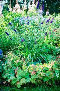 Vlinderstruik 07 WEB marcelineke 200x300 - Geniet in augustus van vlinders in je tuin