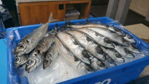 markreel vers 300x169 - Wat weet jij eigenlijk van makreel?